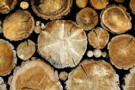 Soñando con la madera