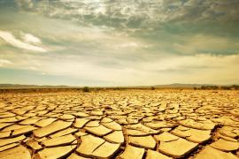 Soñando con el desierto