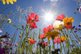 El lenguaje de las flores… En sueños